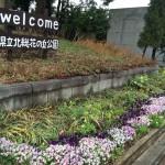 「春まつり&フリーマーケット」が4/16(土),17(日)に開催されます!【北総花の丘公園】