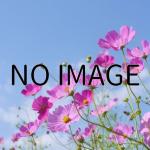 2/6(土)〜3/27(日)まで「魔法の美術館」が開催中です!【佐倉市立美術館】