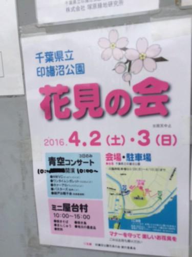 inbanuma-sakura-07