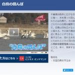 テレビ東京のニュース番組「ワールドビジネスサテライト」にて印西市内にある『白鳥の郷』が紹介されました!