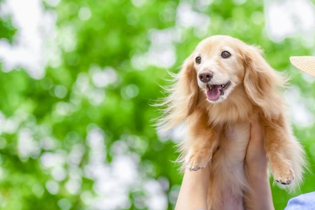 12 8 日 開催 Moff ほごけんカフェ主催 保護犬譲渡会がbighop印西